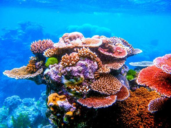 Estancia en Cairns