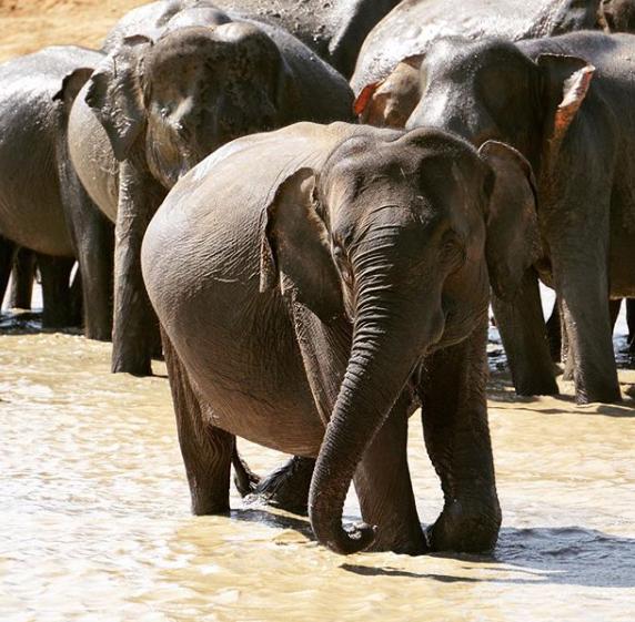 6 sept elefantes Viaje de aventura por Srilanka