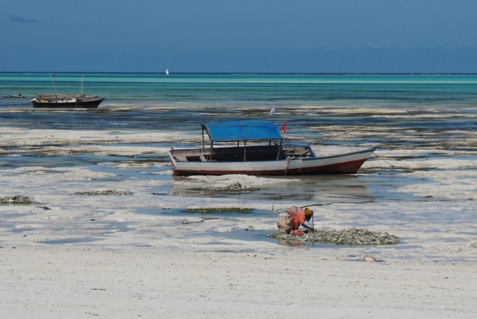 Safari privado en Tanzania con extensión a Zanzibar