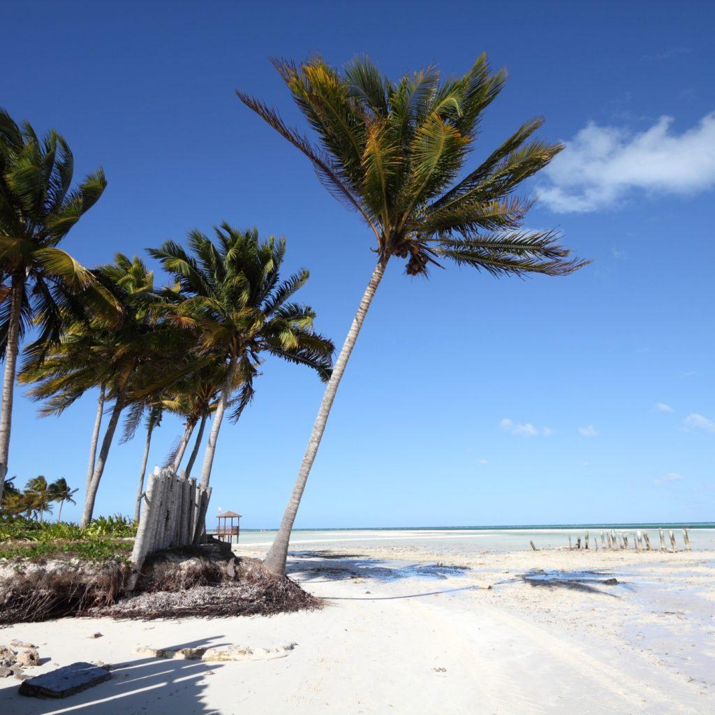 Cuba - Caribbean beach Cayo Guillermo. Sandy coast nad coconut palm trees. Jardines del Rey region.