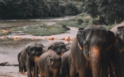 Sri Lanka, elefantes y té en el corazón del océano índico.