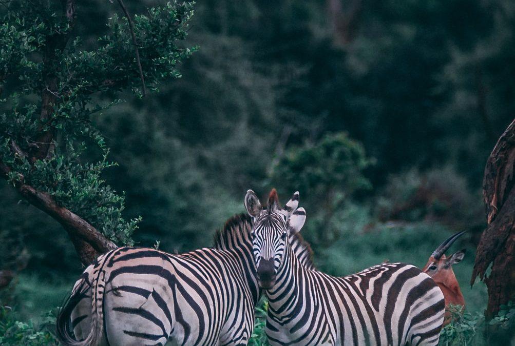 La gran migración de los animales en Tanzania